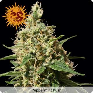 Peppermint Kush - Barneys Farm