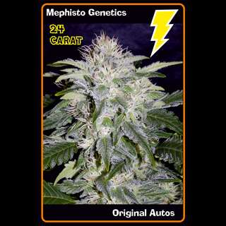 24 Carat AUTO Feminised Seeds