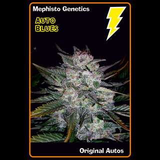 Auto Blues Feminised Seeds