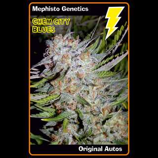 Chem City Blues Auto - Mephisto Genetics
