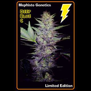 Deep Blue C Auto Feminised Seeds
