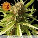 Red Cherry Berry Feminisierte Samen 10 Seeds