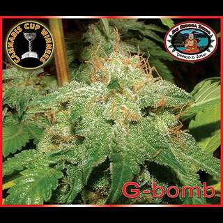 G-Bomb - Big Buddha Seeds