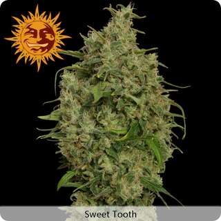 Sweet Tooth - Barneys Farm