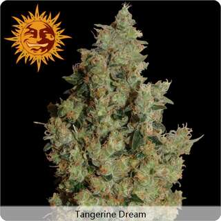 Tangerine Dream - Barneys Farm