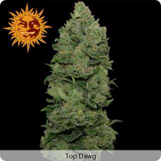 Top Dawg - Barneys Farm