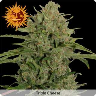 Triple Cheese - Barneys Farm
