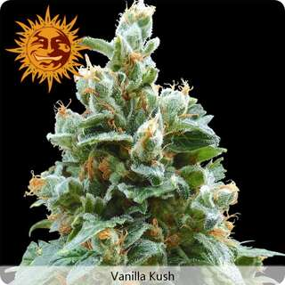 Vanilla Kush - Barneys Farm