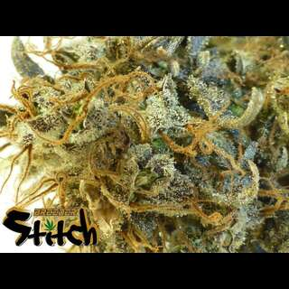 Stitchs Love Potion Autoflowering Feminised Seeds - 3 Seeds