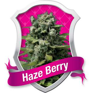 Haze Berry - Royal Queen Seeds