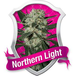Northern Light Feminised Seeds