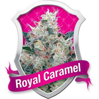 Royal Caramel (Honey Cream) Feminised Seeds