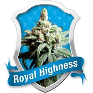 Royal Highness Feminised Seeds 3 Seeds