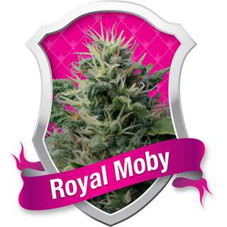Royal Moby - Royal Queen Seeds