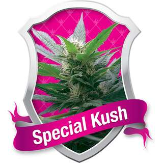 Special Kush #1 - Royal Queen Seeds