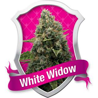 White Widow - Royal Queen Seeds