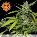 Sweet Tooth Auto Feminised Seeds 5 Seeds
