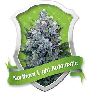 Northern Light Automatic Feminised Seeds 3 Seeds