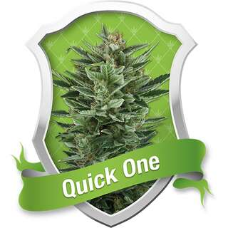 Quick One Auto - Royal Queen Seeds