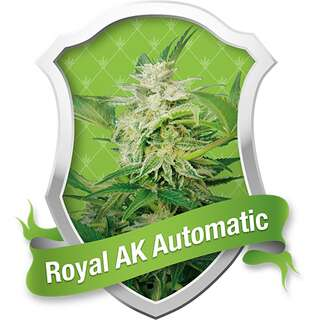 Royal AK Auto - Royal Queen Seeds