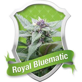 Royal Bluematic Automatic Feminised Seeds