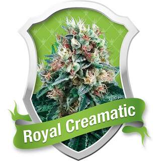 Royal Creamatic Automatic Feminised Seeds
