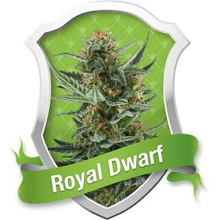 Royal Dwarf Automatic Feminised Seeds 3 Seeds
