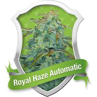 Royal Haze Auto - Royal Queen Seeds - 3 Samen