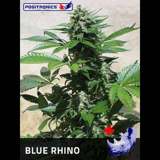 Blue Rhino Feminised Seeds