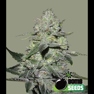 Gorilla Bomb from Bomb Seeds