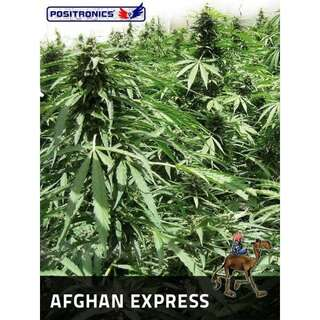 Afgahn Express Auto from Positronic Seeds