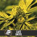 Cafe Racer from Blimburn Seeds