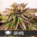 Gelato from Blimburn Seeds