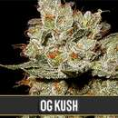 OG Kush from Blimburn Seeds