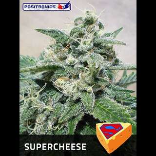 Supercheese - Positronic Seeds