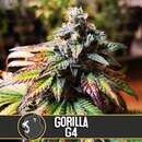 Gorilla Glue #4 - Blimburn Seeds