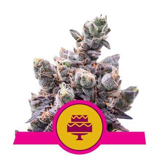 Wedding Gelato - Royal Queen Seeds 3 Samen