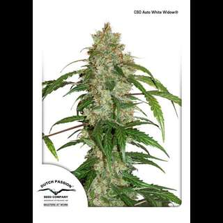 CBD Auto White Widow - Dutch Passion 7 Samen