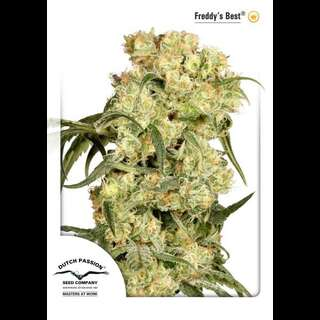 Freddies Best Feminised Seeds