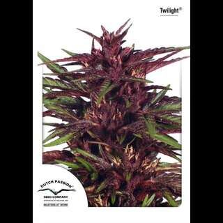 Twilight Feminised Seeds