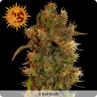 8 Ball Kush - Barneys Farm