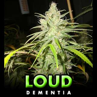 Dementia - Loud Seeds
